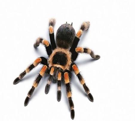 http://infoznania.ru/images/spider.jpg