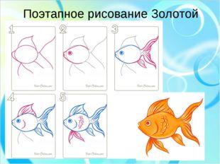 Поэтапное рисование Золотой Рыбки рыбки