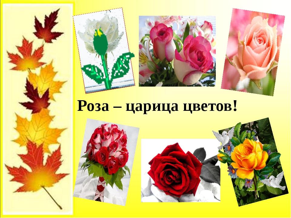 Роза – царица цветов!