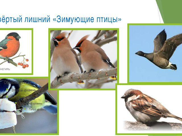 Четвёртый лишний «Зимующие птицы»