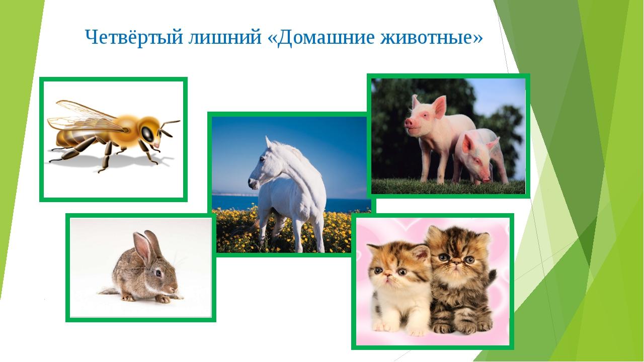 Четвёртый лишний «Домашние животные»