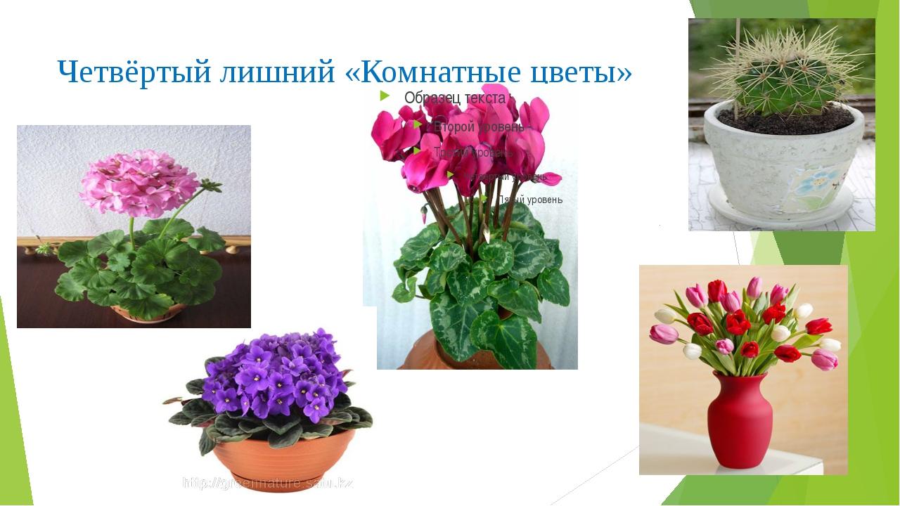 Четвёртый лишний «Комнатные цветы»
