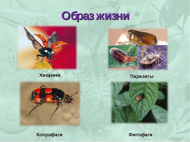 Образ жизни Хищники Паразиты Копрофаги Фитофаги