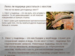 Чем же так важен для ящерицы хвост? 1. Хвост у ящерицы – это как руль, или ш