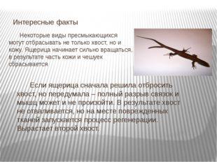 Некоторые виды пресмыкающихся могут отбрасывать не только хвост, но и кожу.
