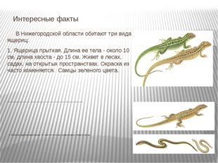 В Нижегородской области обитают три вида ящериц: 1. Ящерица прыткая. Длина е