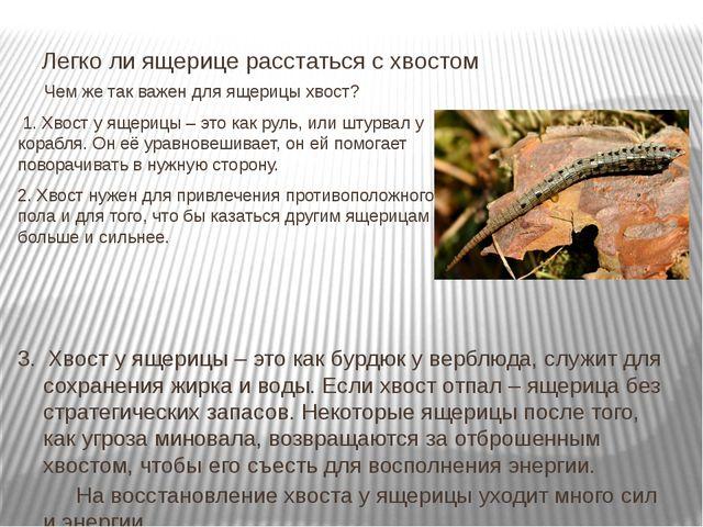 Чем же так важен для ящерицы хвост? 1. Хвост у ящерицы – это как руль, или ш...