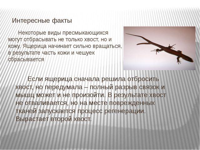 Некоторые виды пресмыкающихся могут отбрасывать не только хвост, но и кожу....