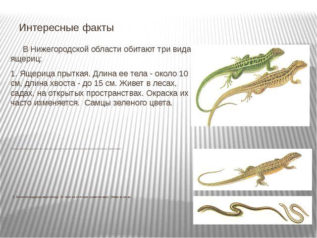В Нижегородской области обитают три вида ящериц: 1. Ящерица прыткая. Длина е...
