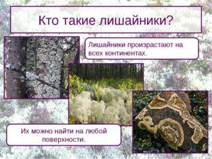 Кто такие лишайники? Лишайники произрастают на всех континентах. Их можно най