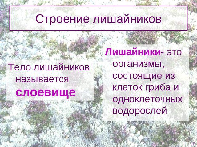Строение лишайников Тело лишайников называется слоевище Лишайники- это органи...