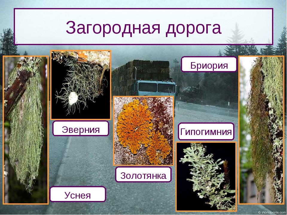 Загородная дорога