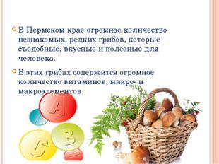 В Пермском крае огромное количество незнакомых, редких грибов, которые съедо