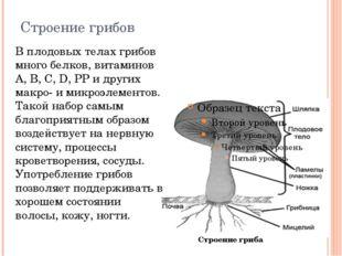 Строение грибов В плодовых телах грибов много белков, витаминов А, В, C, D, P