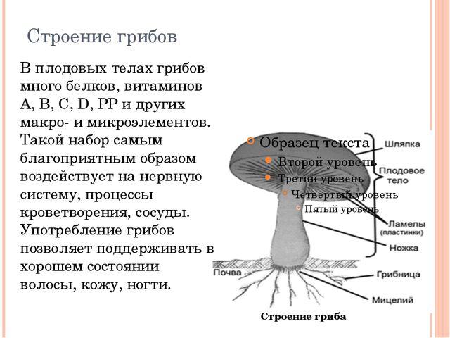 Строение грибов В плодовых телах грибов много белков, витаминов А, В, C, D, P...
