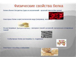 Физические свойства белка Белки обычно бесцветны (одно из исключений – красны