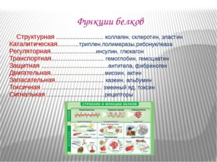 Функции белков Структурная .......................... коллаген, склеротин, эл