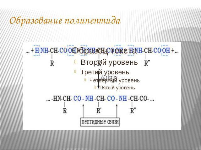 Образование полипептида