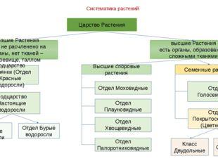 Систематика растений Царство Растения низшие Растения тело не расчленено на о