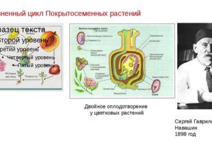 Жизненный цикл Покрытосеменных растений Двойное оплодотворение у цветковых ра