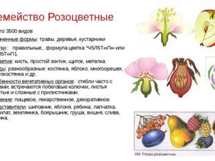 Семейство Розоцветные около 3500 видов Жизненные формы: травы, деревья, куста