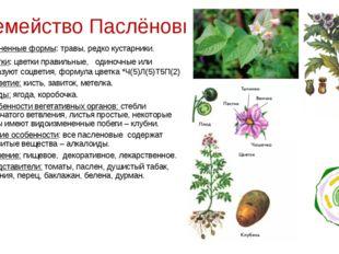 Семейство Паслёновые Жизненные формы: травы, редко кустарники. Цветки: цветки