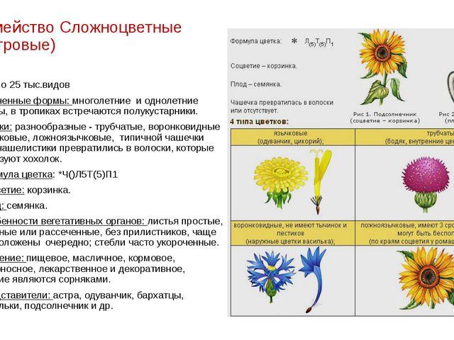 Семейство Сложноцветные (Астровые) около 25 тыс.видов Жизненные формы: многол...