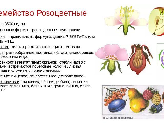 Семейство Розоцветные около 3500 видов Жизненные формы: травы, деревья, куста...