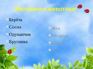 Растения и животные Берёза Сосна Одуванчик Брусника Жук Медведь Голубь сом