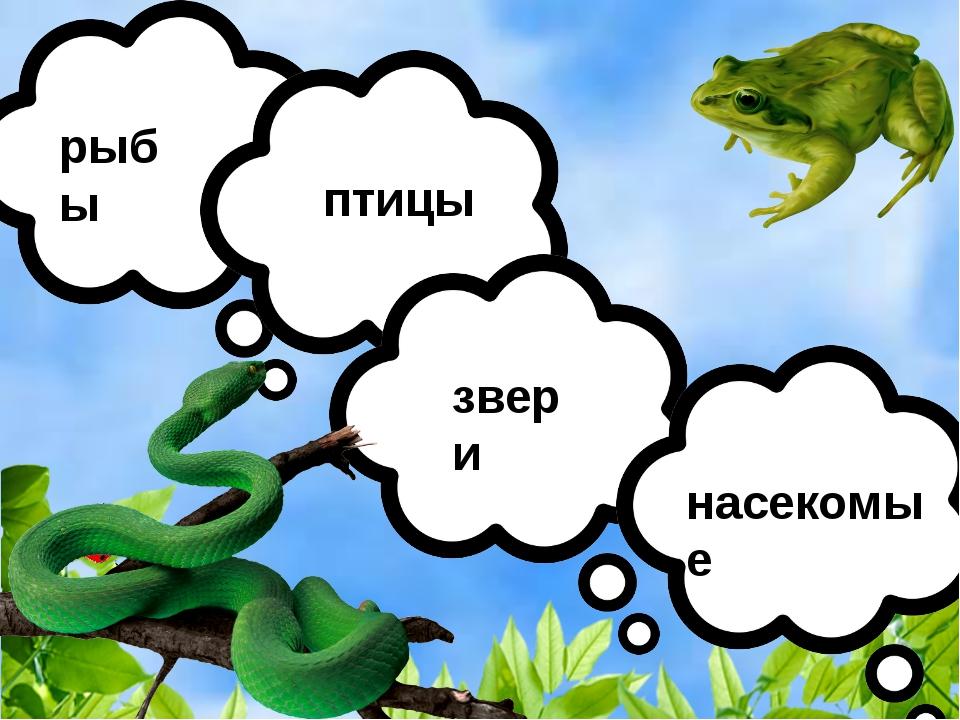 рыбы птицы звери насекомые