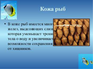Кожа рыб В коже рыб имеется много желез, выделяющих слизь, которая уменьшает