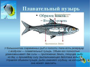 Плавательный пузырь У большинства современных рыб в полости тела есть резерву