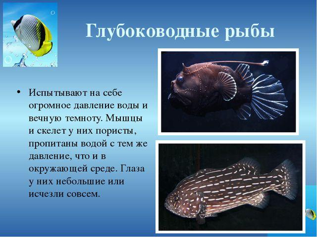 Глубоководные рыбы Испытывают на себе огромное давление воды и вечную темноту...