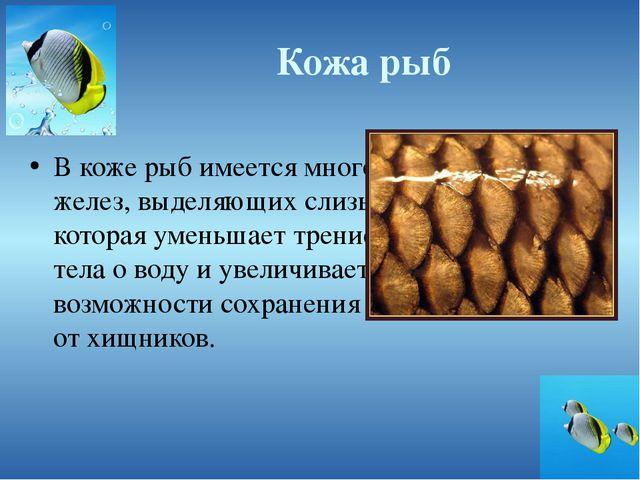 Кожа рыб В коже рыб имеется много желез, выделяющих слизь, которая уменьшает...