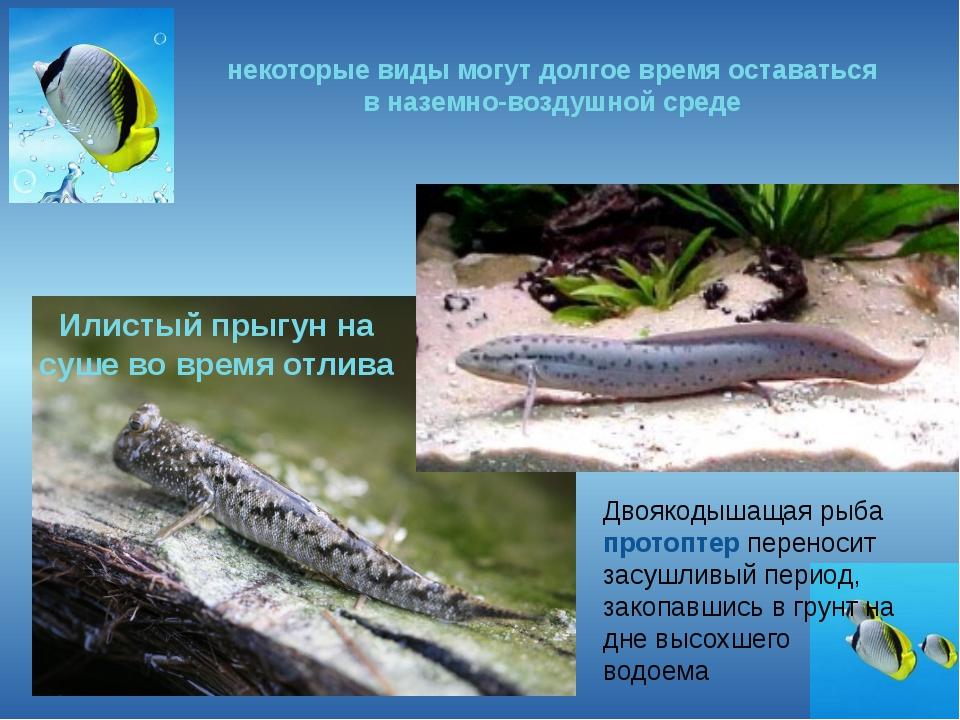 некоторые виды могут долгое время оставаться в наземно-воздушной среде Илисты...