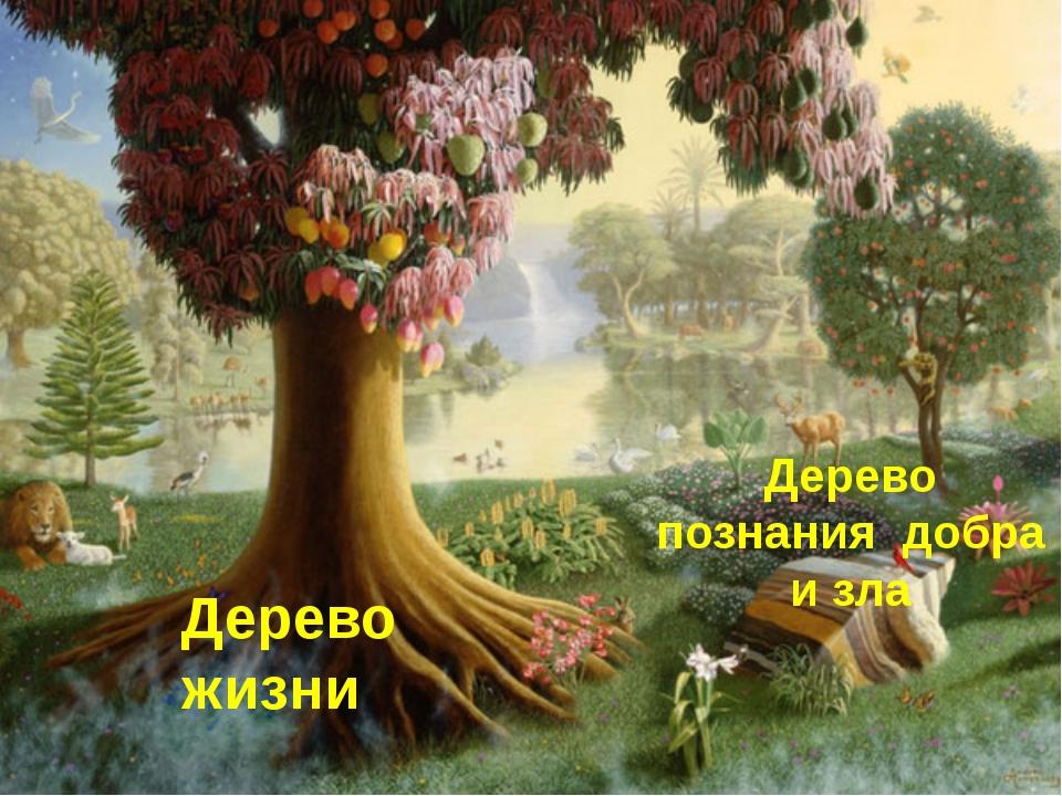Дерево жизни Дерево познания добра и зла