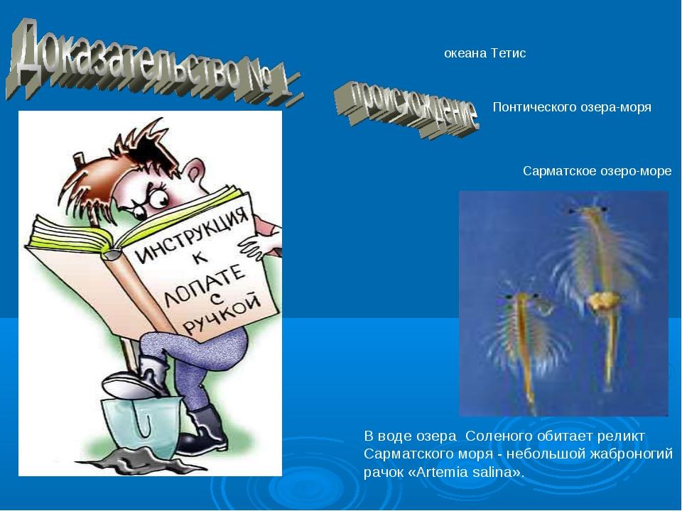 В воде озера Соленого обитает реликт Сарматского моря - небольшой жаброногий...