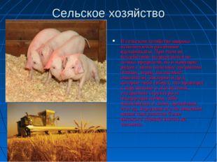 Сельское хозяйство В сельском хозяйстве широко используются различные ядохими