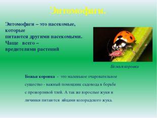 Энтомофаги. Энтомофаги – это насекомые, которые питаются другими насекомыми.