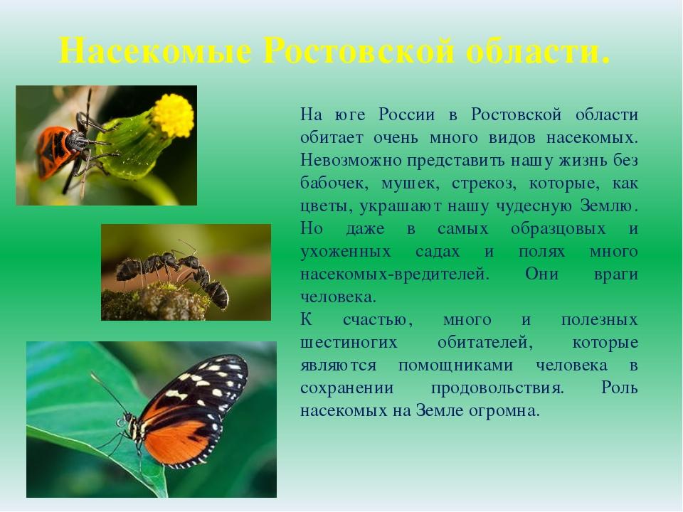 На юге России в Ростовской области обитает очень много видов насекомых. Невоз...