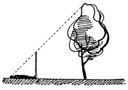 Определение высоты предметов по шесту