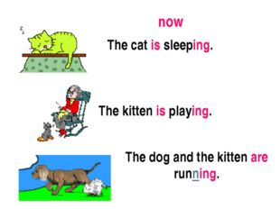 The cat is sleeping. The kitten is playing. The dog and the kitten are runnin