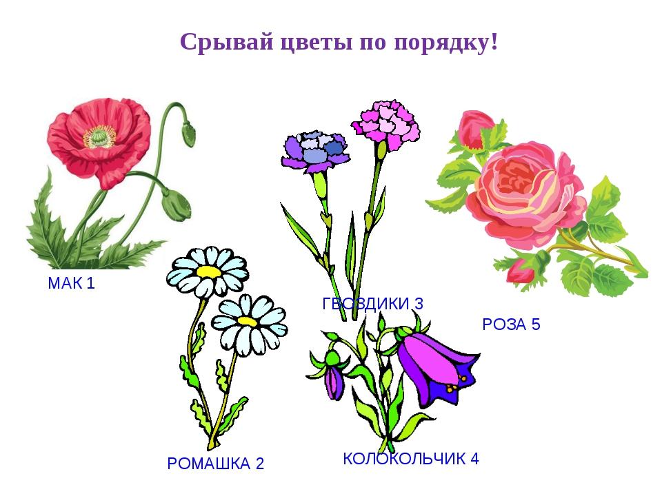 картинки цветов колокольчик одуванчик мак ромашка реагируют движущиеся