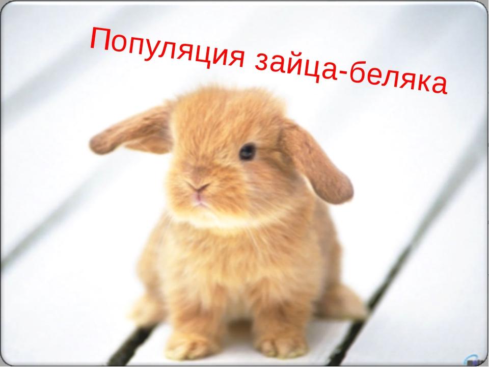Популяция зайца-беляка