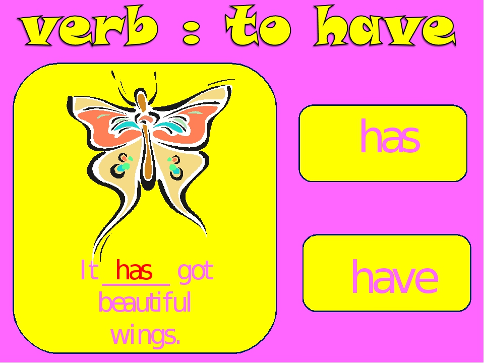 has have It _____ got beautiful wings. has
