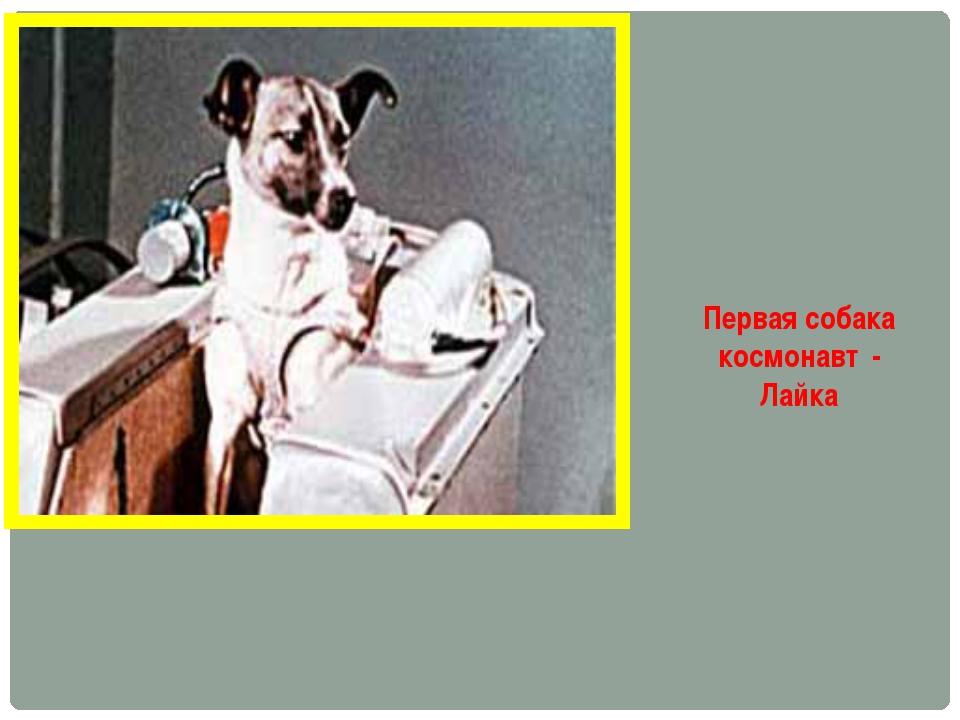 Первая собака космонавт - Лайка