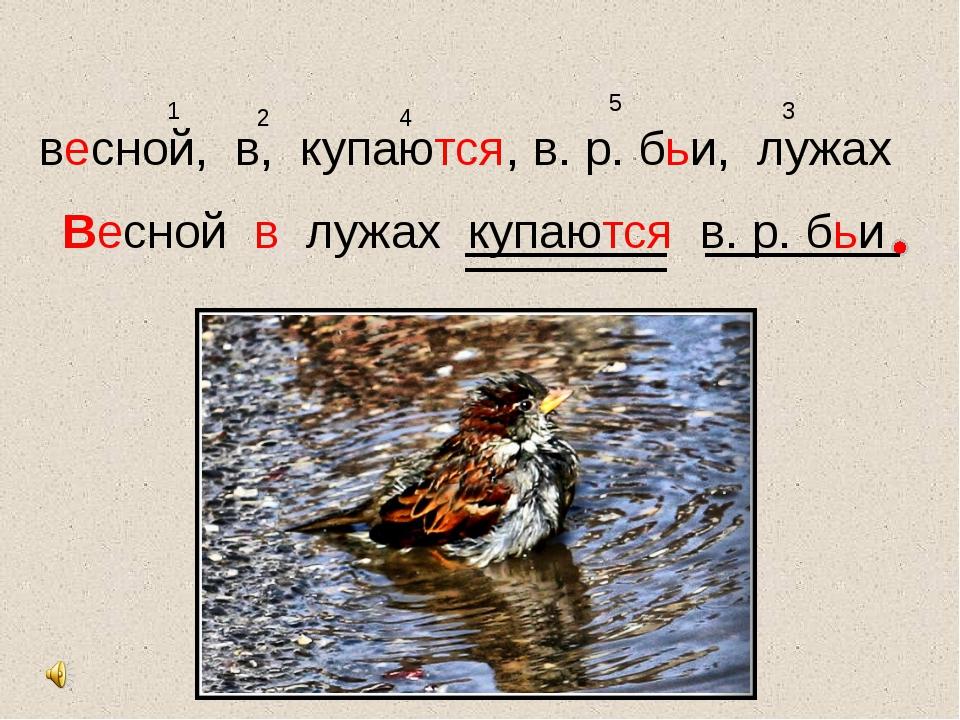 весной, в, купаются, в. р. бьи, лужах 1 2 3 4 5 Весной в лужах купаются в. р....