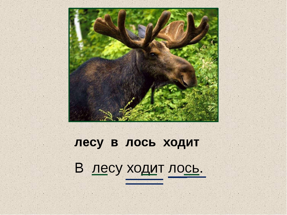 лесу в лось ходит В лесу ходит лось.