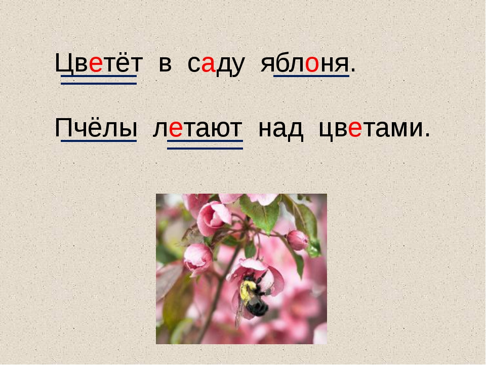 Цветёт в саду яблоня. Пчёлы летают над цветами.