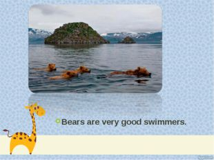 Bears are very good swimmers.